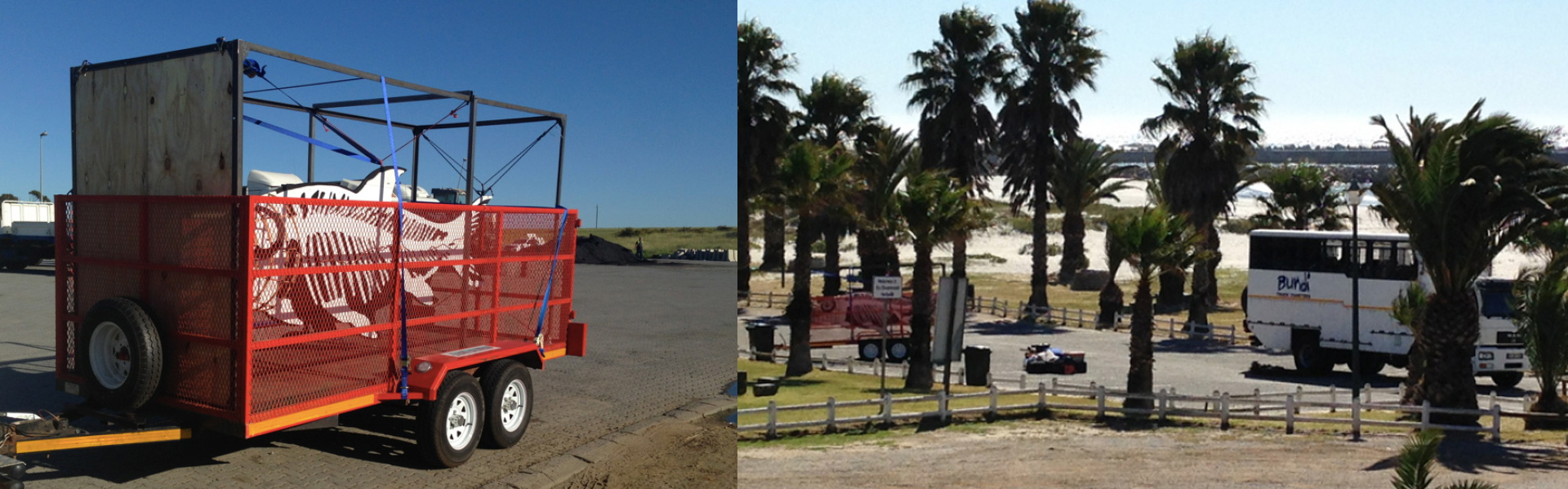 Images depict the tigerfish as it travels from Cape Town to Lambert's Bay. Left the fish and cage is ractchet strapped to a trailer; right the bus travels through a row of palm trees